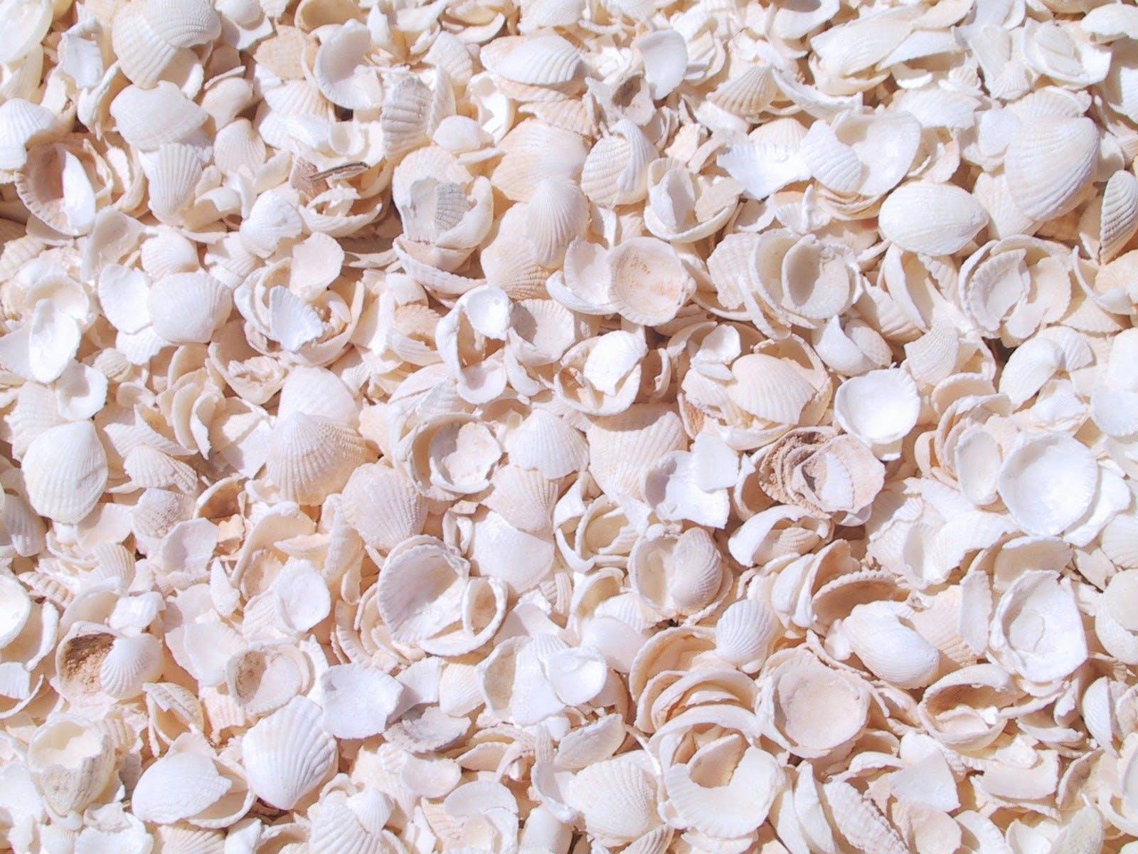 shell beach wa