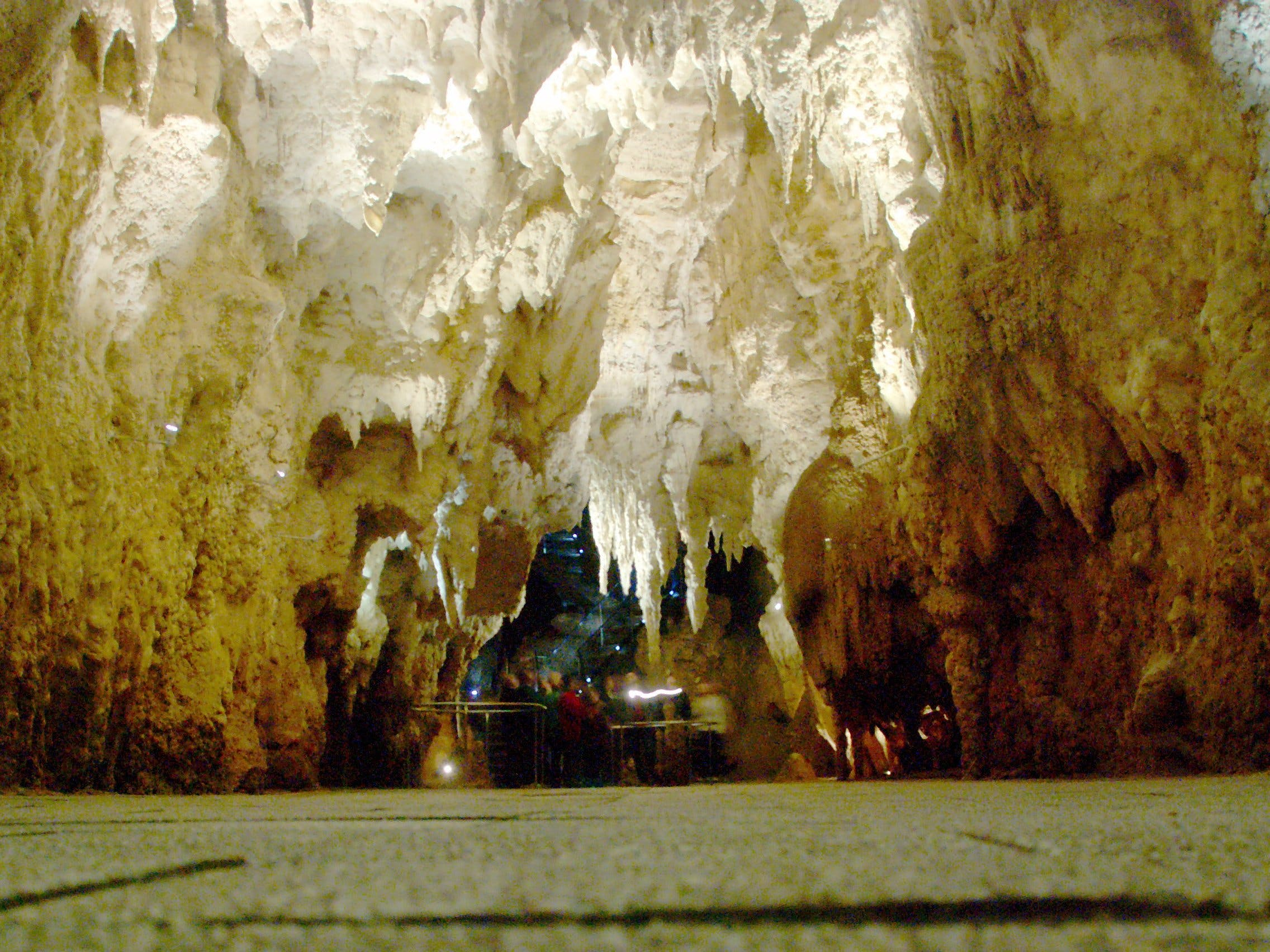 cathedral in waitomo caves
