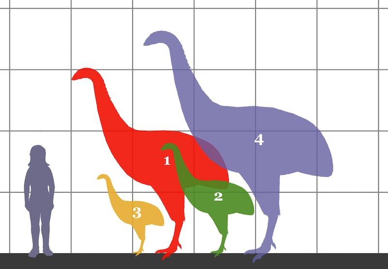 moa new zealand flightless bird extinct