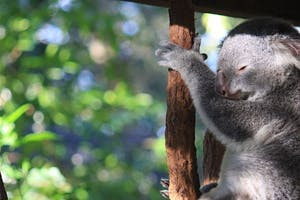 must see places on east coast Australia