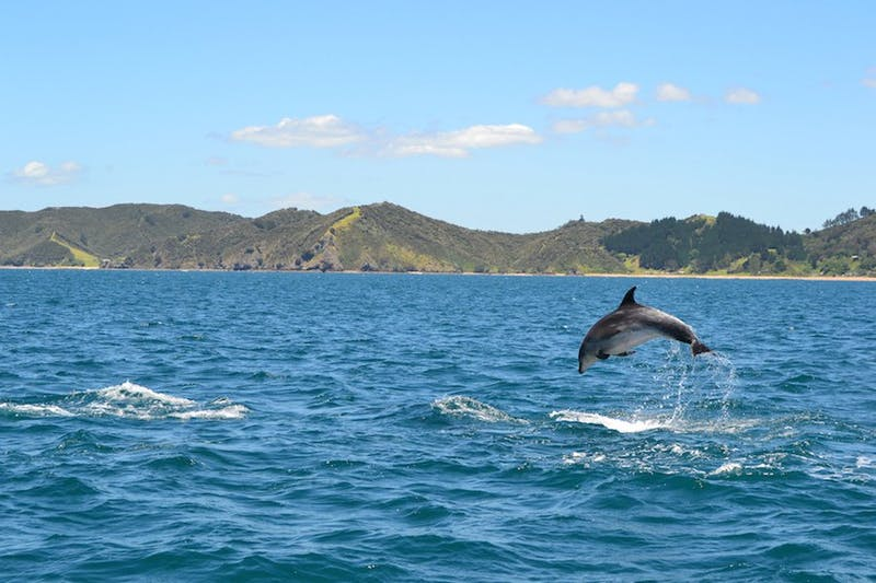 swim with dolphins paihia