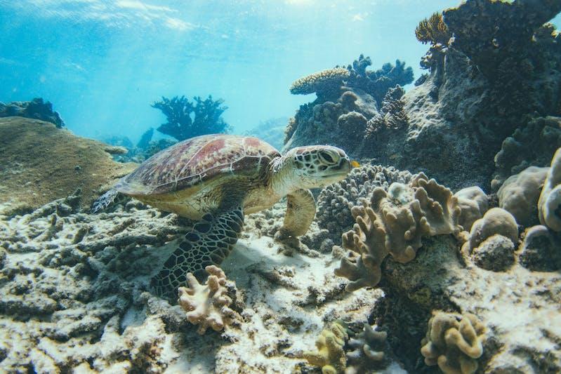 snorkelling with turtles ocean rafting airlie beach