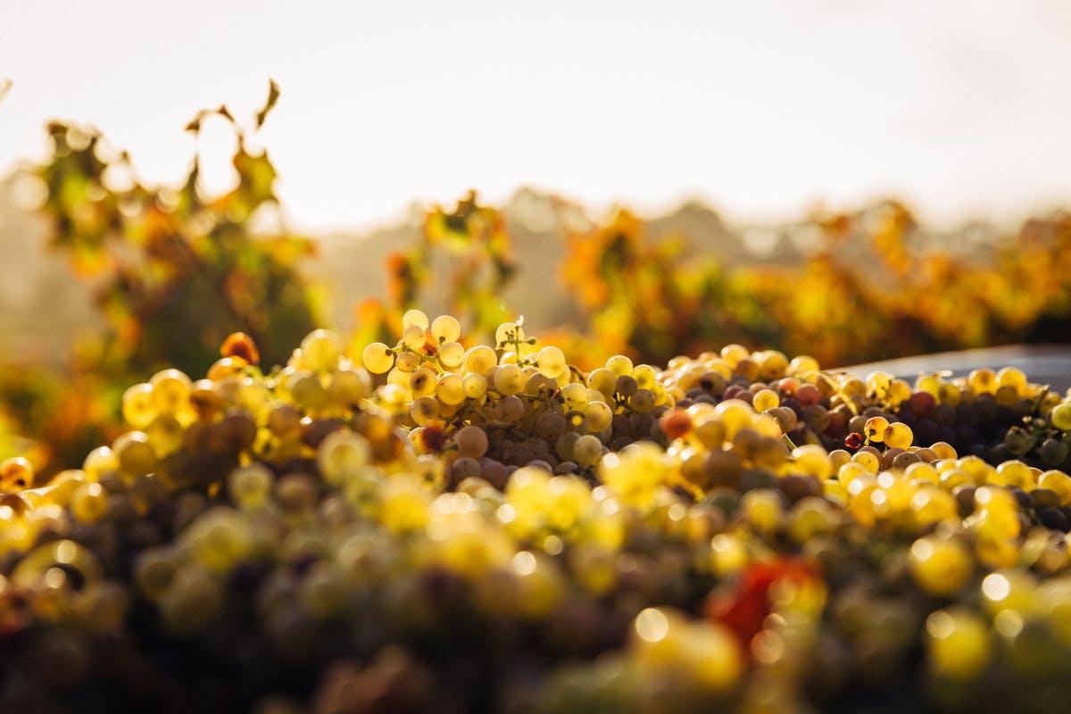 weekend winery getaways