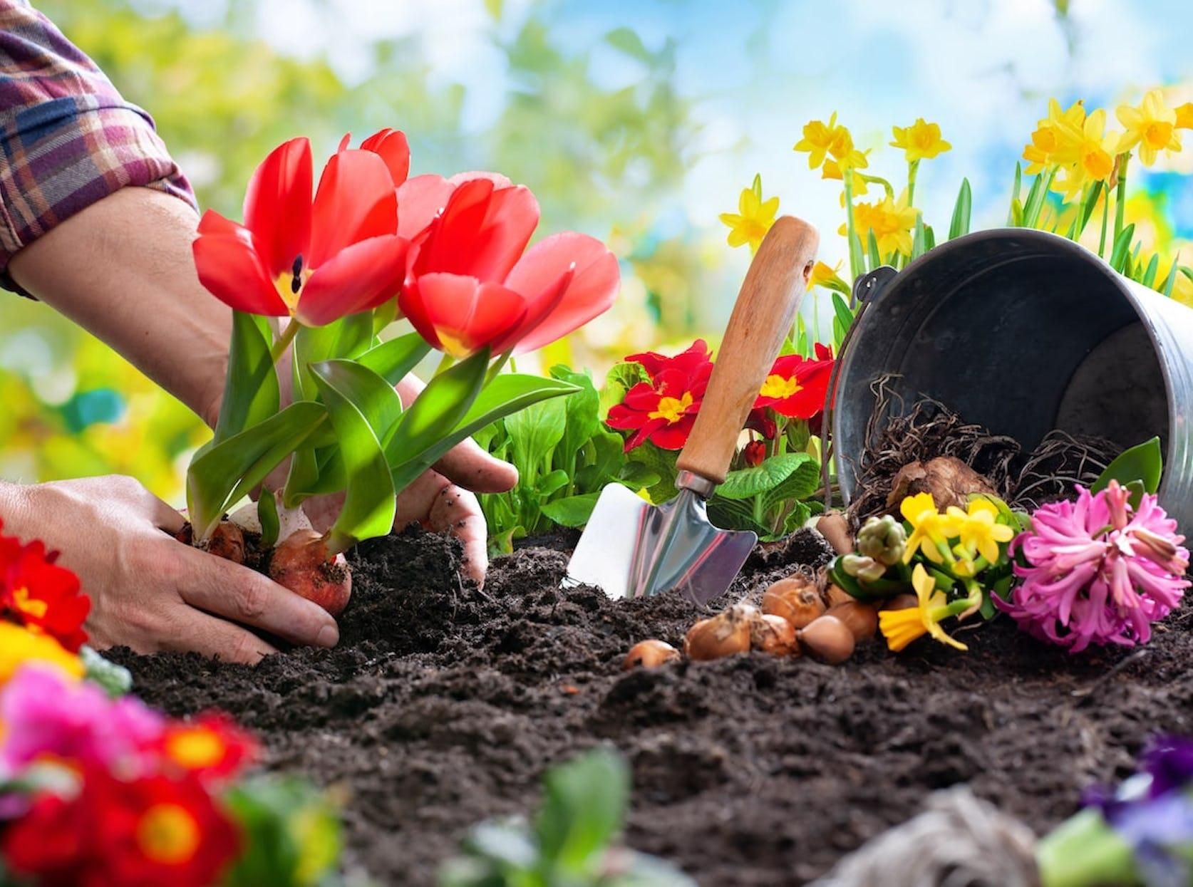 plante colorées jardin