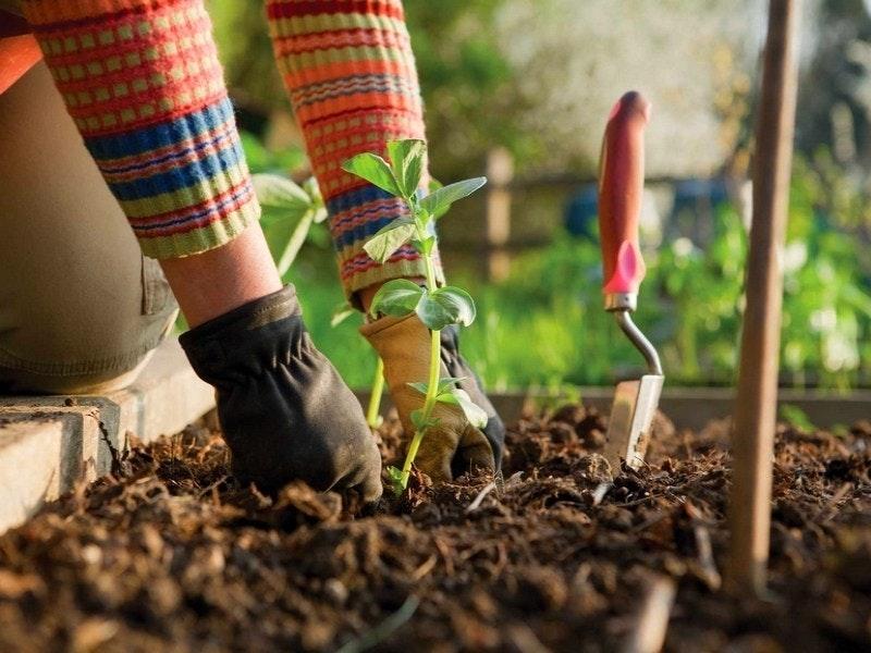 1590553018 jardinage sante