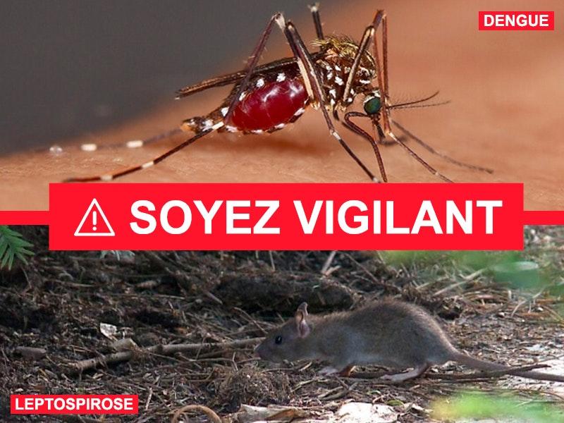 1610426610 lepto dengue pave site