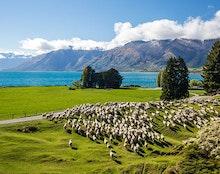 New Zealand Solar News