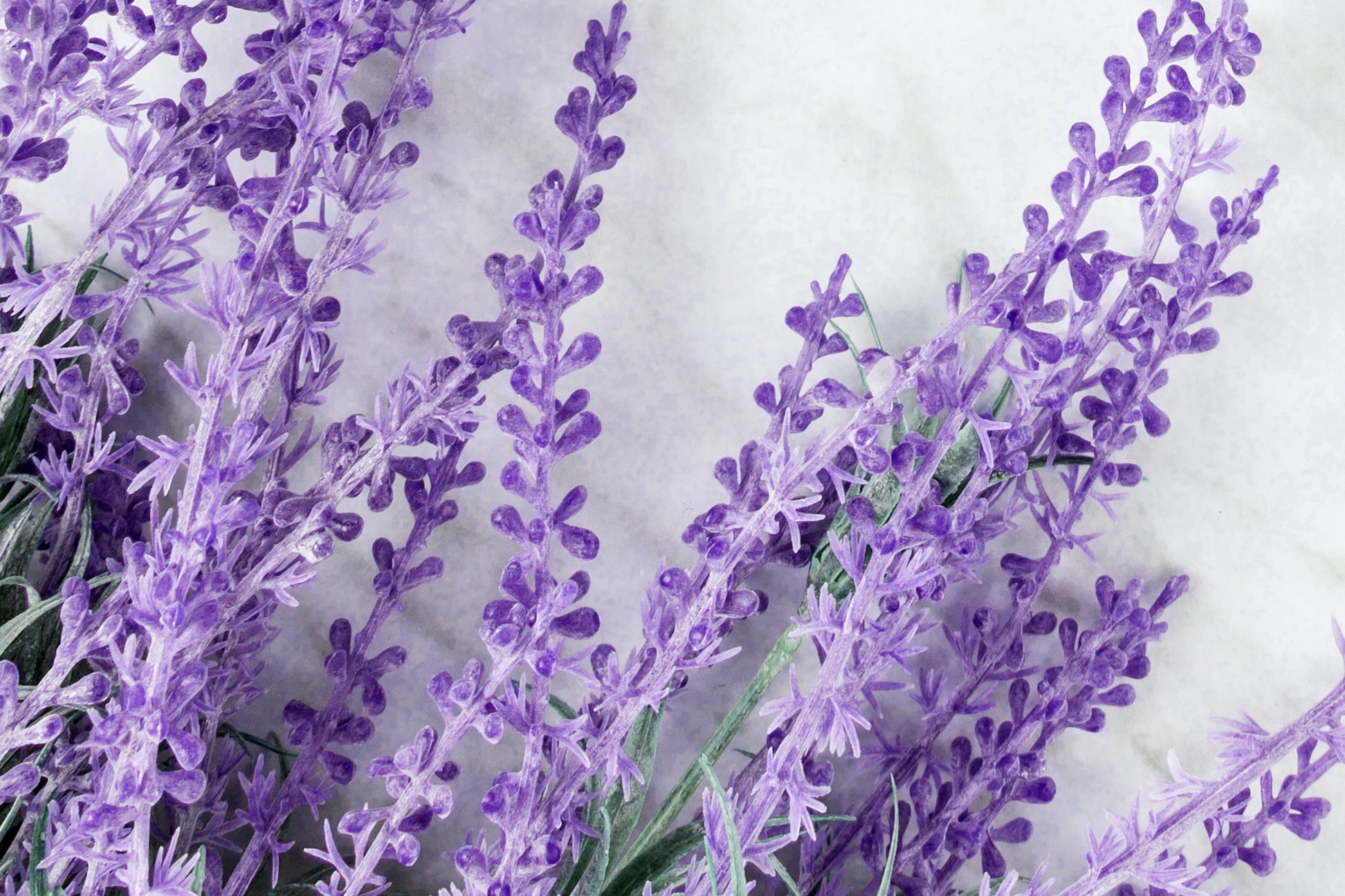 Lavender Calms the Spirit — And Apparently the Skin, Too