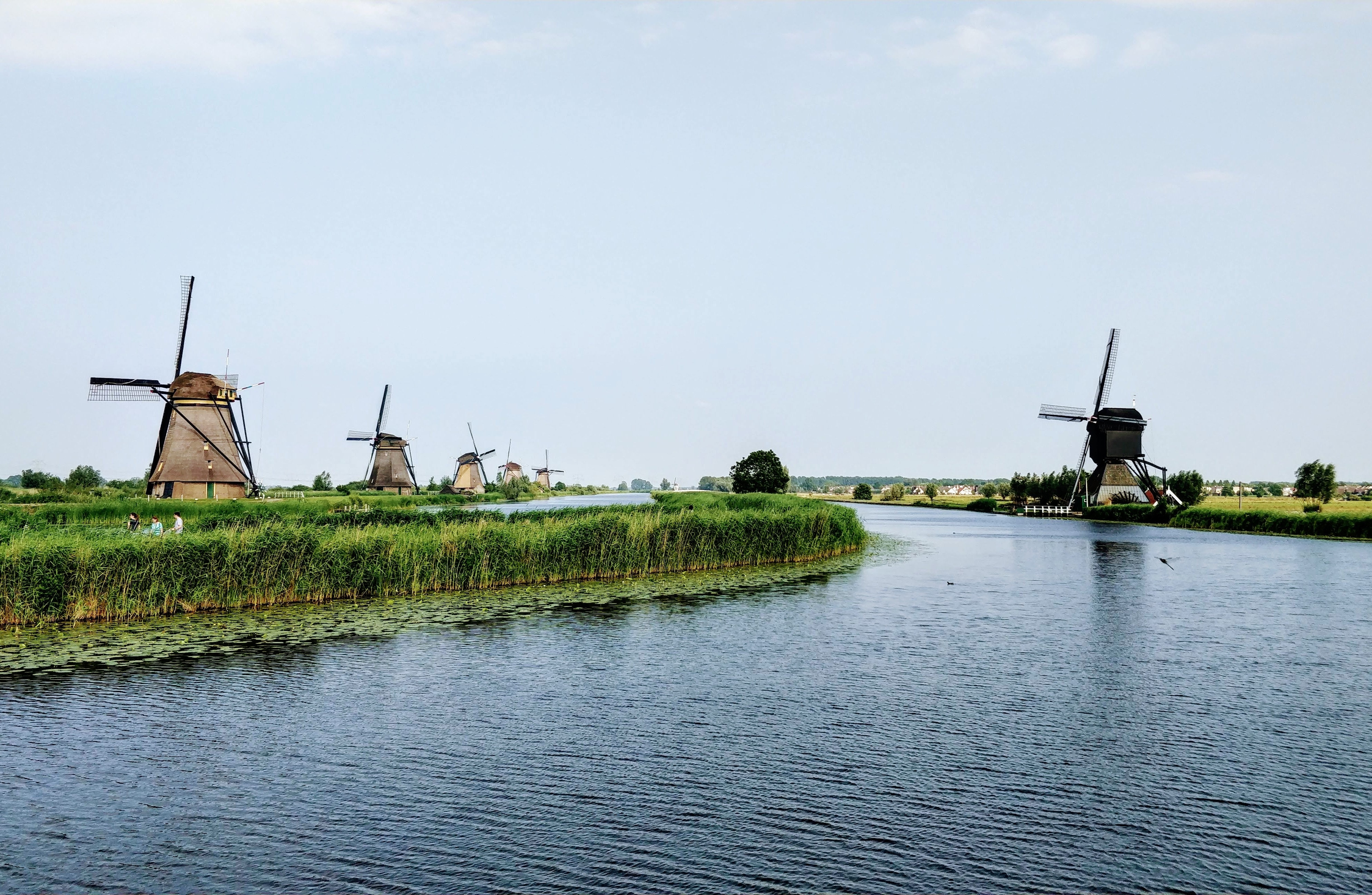 Study in the Netherlands: 5 Things You Should Know