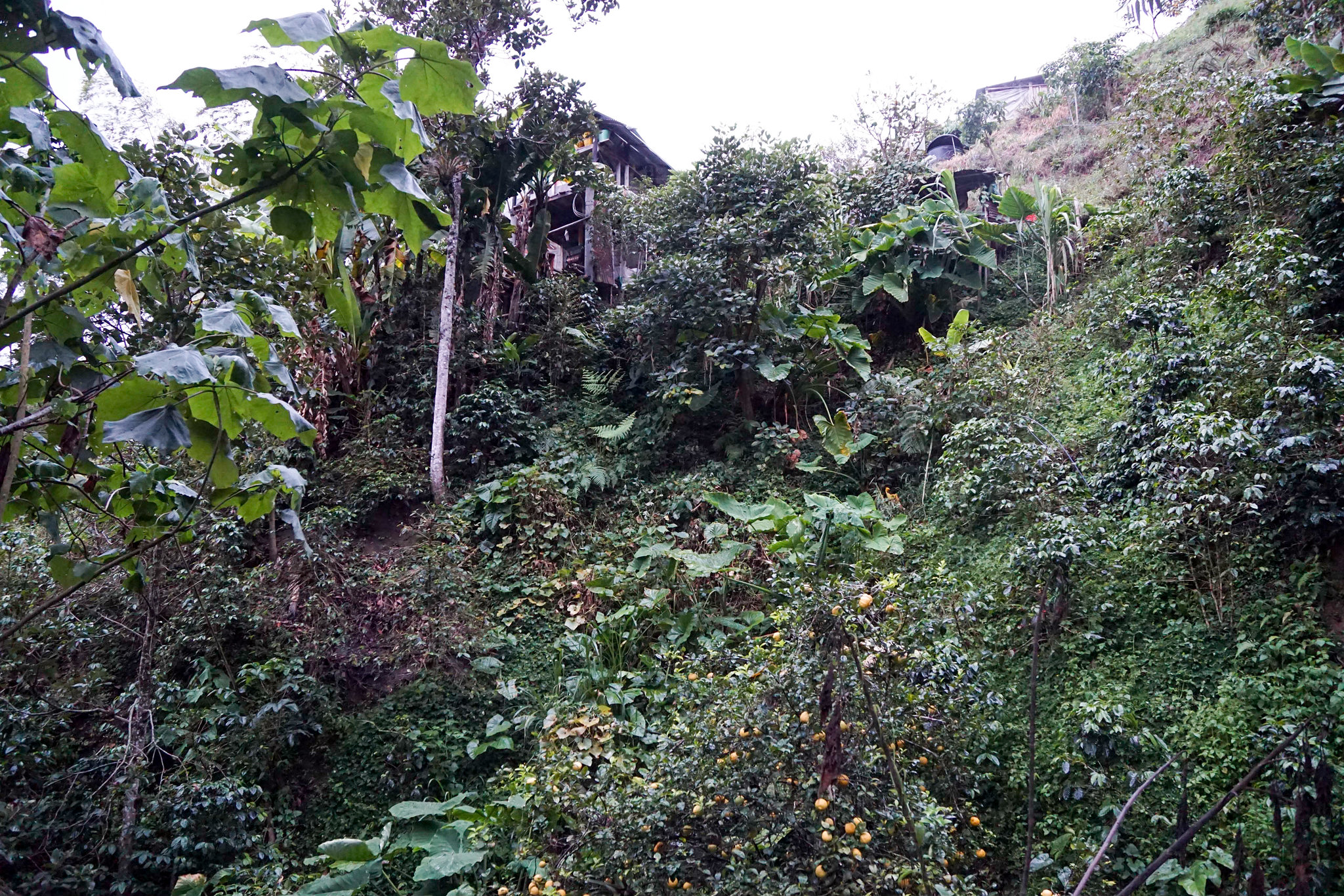 The farm of José Ignacio Pardo Torres, Finca La Cabaña, on the steep mountain slope.