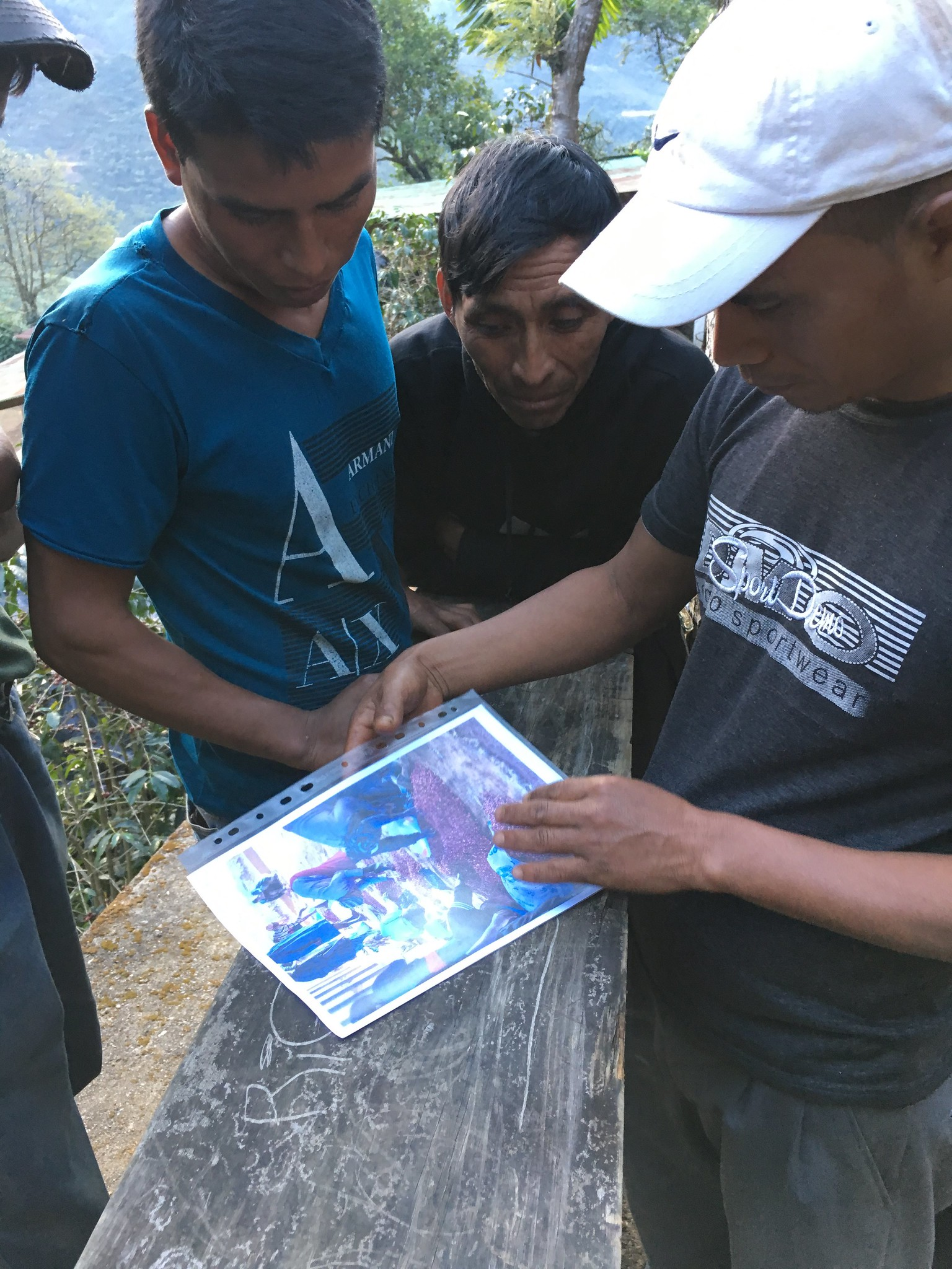 Pickers at FVH looking at pictures of ripe cherries