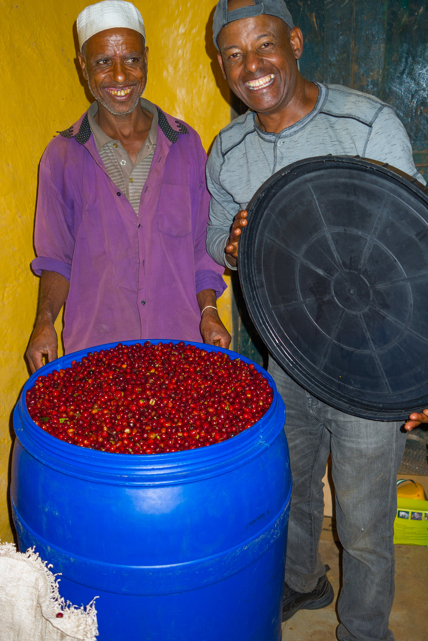 fermenting coffee cherries
