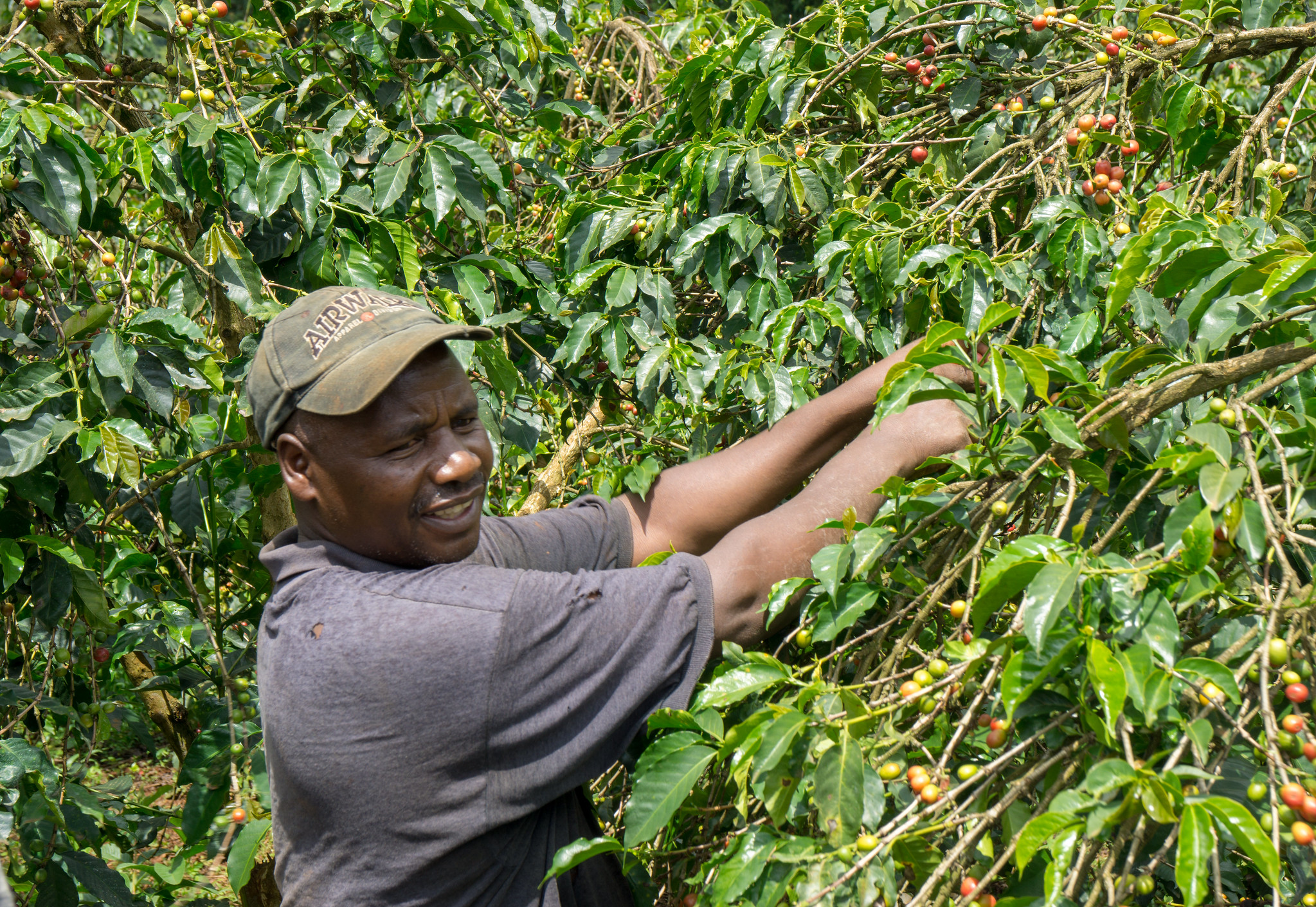 Joseph Ngari was featured in our magazine KAFFE issue 2. This year he's selected as a model farmer to teach others in this region.