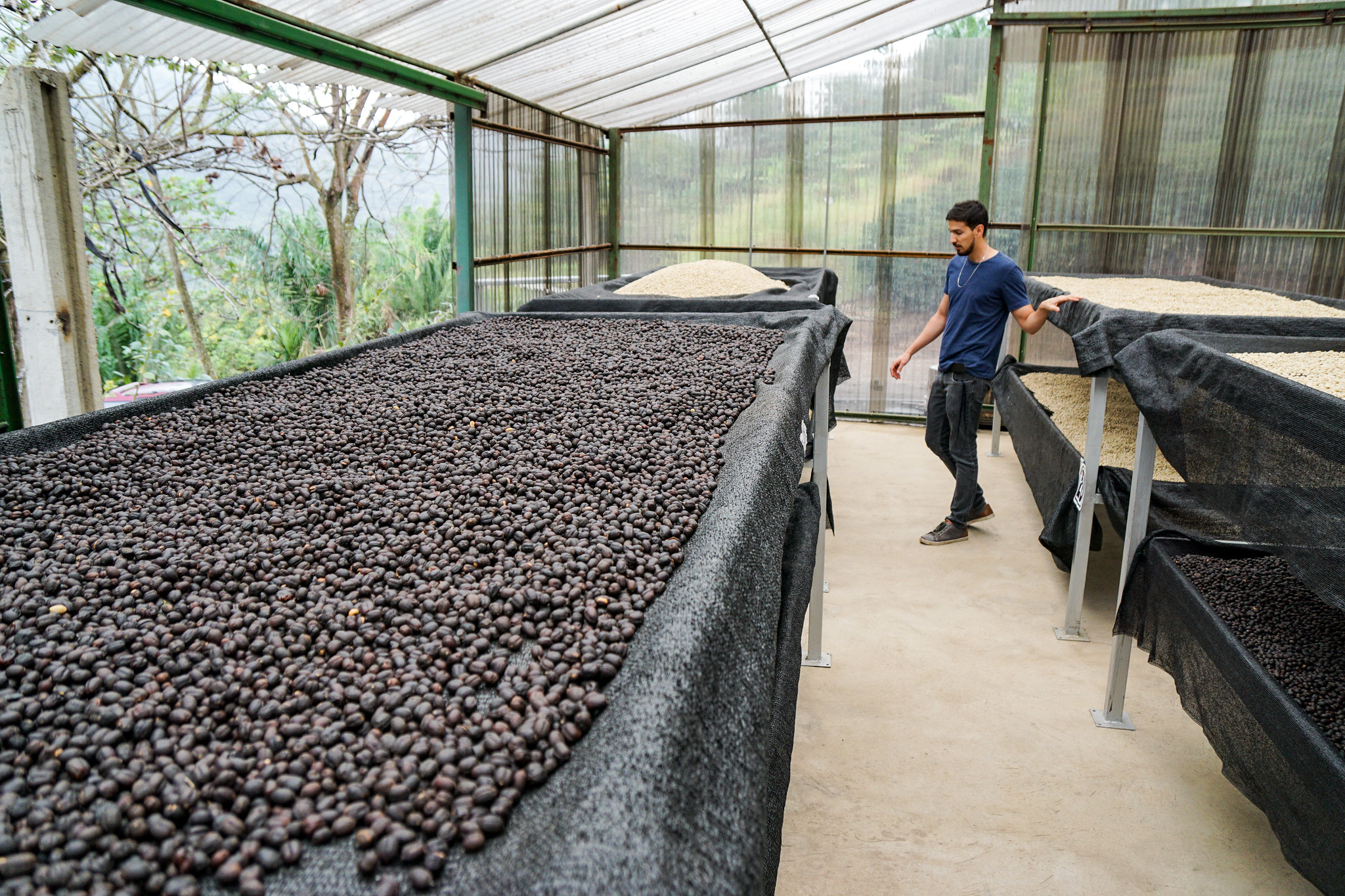 PedroPablo Rodriguez in the UV shaded drying facility with Coco Naturals