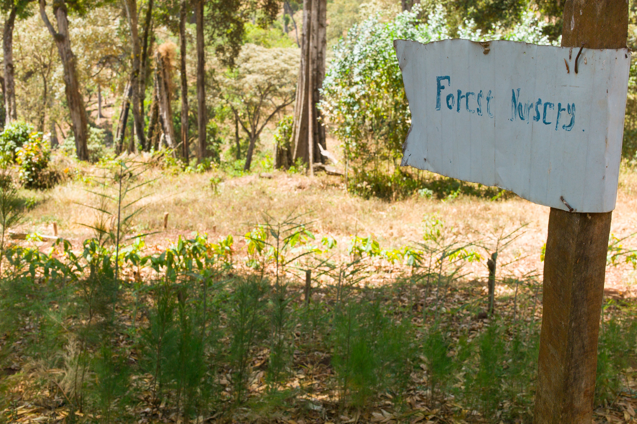 forest nursery
