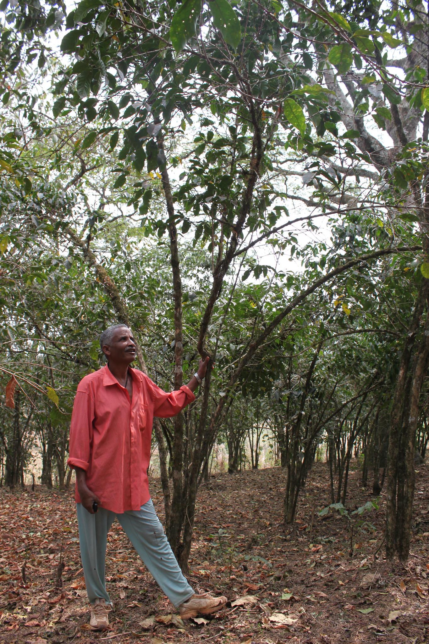 Kebge Wubeshet: Coffeefarmer from Hana Boske Cooperative