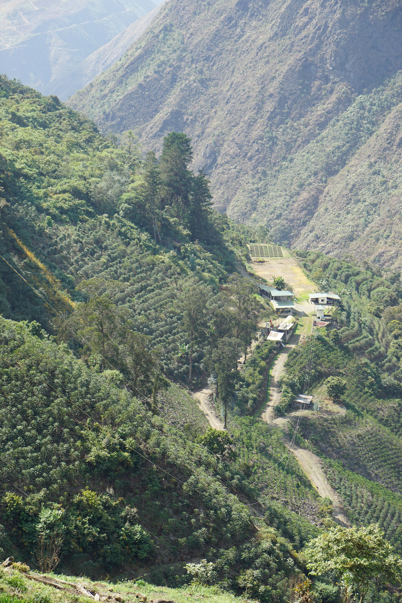 Takesi farm is spectacularly situated on steep slopes with nice lines of coffee trees.