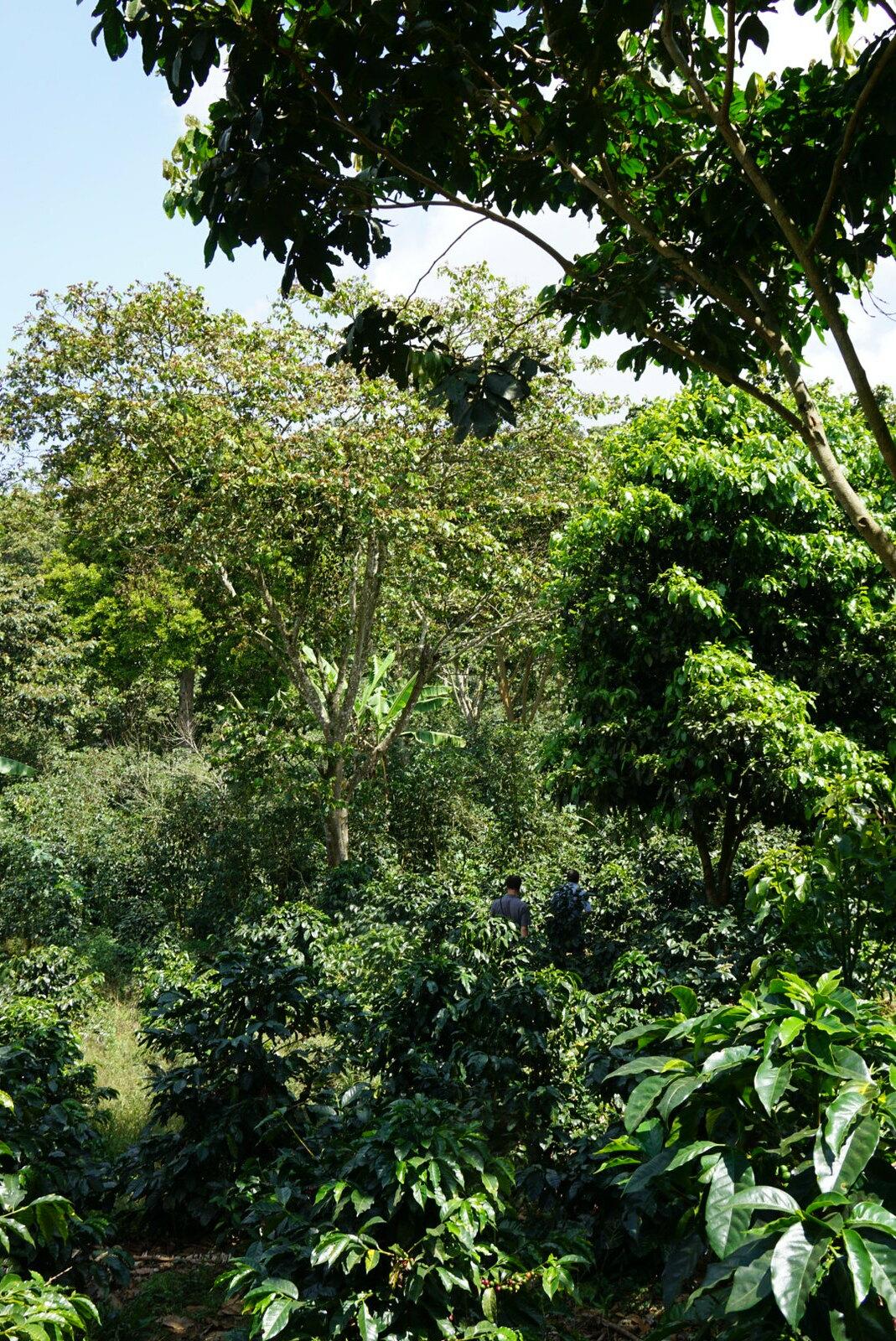 Dense and varied vegetation at Il Professor