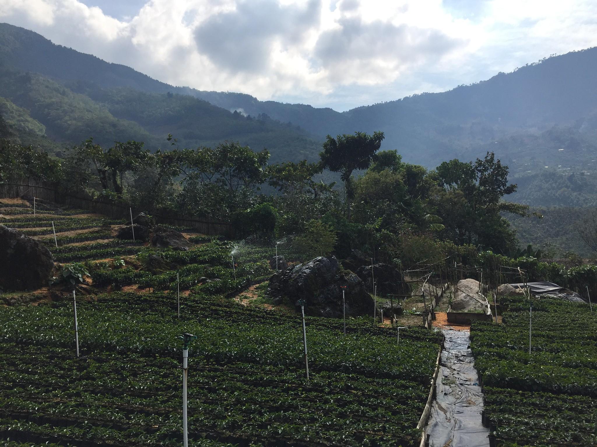 Nursery, Finca Vista Hermosa