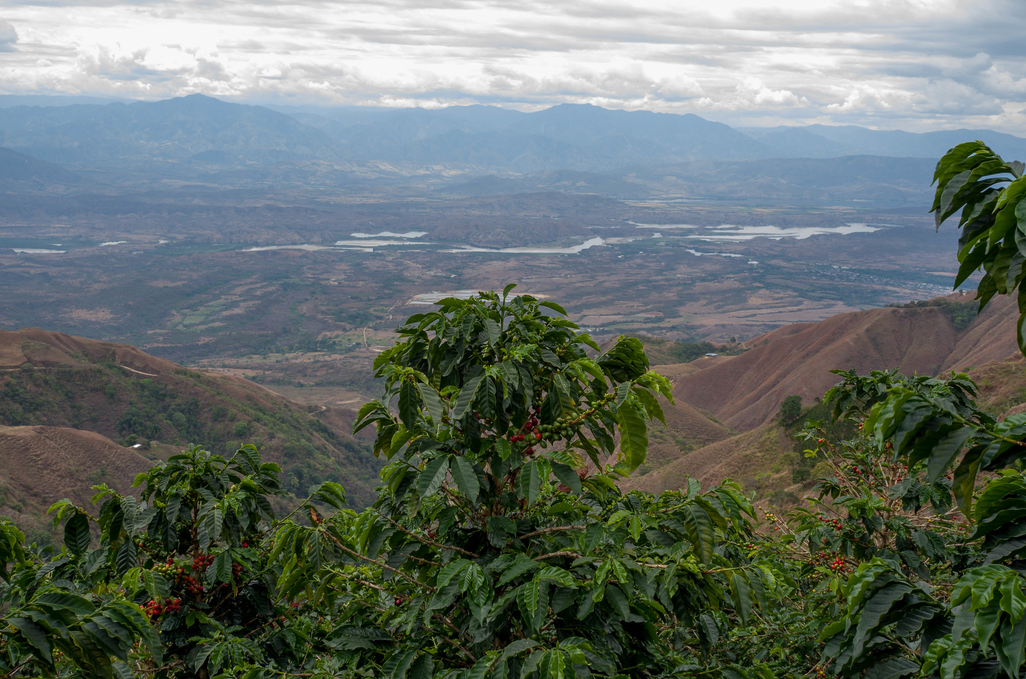Colombia 2015 - The Coffee Collective