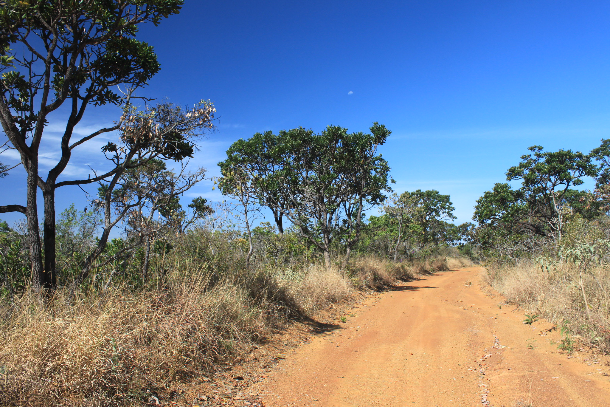 Cerrado vegetation at Daterra