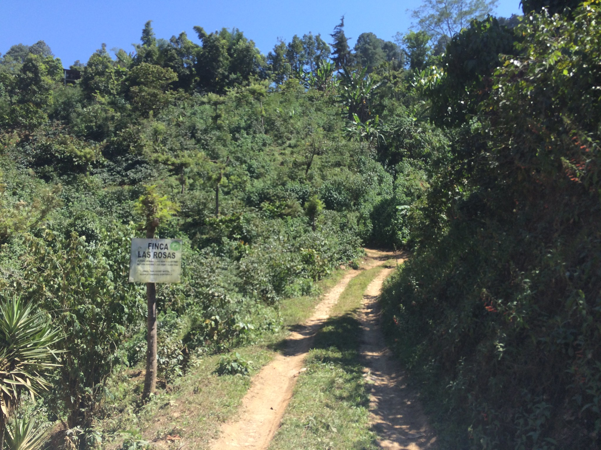 Entrance to Finca Las Rosas, Huehuetenango, Guatemala. Owned by Rolando Villatoro.