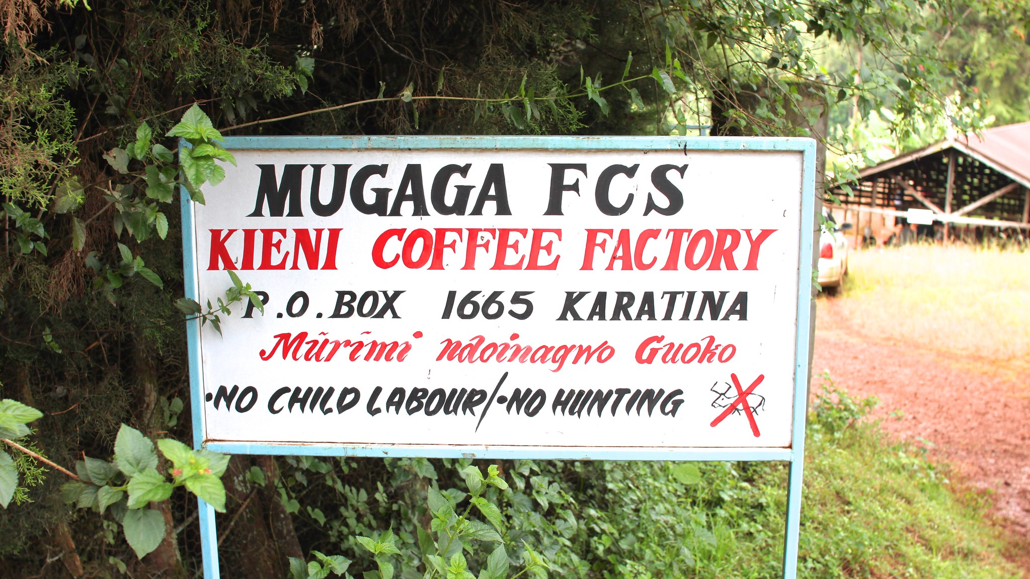 Mugaga society where Kieni is one of five members.