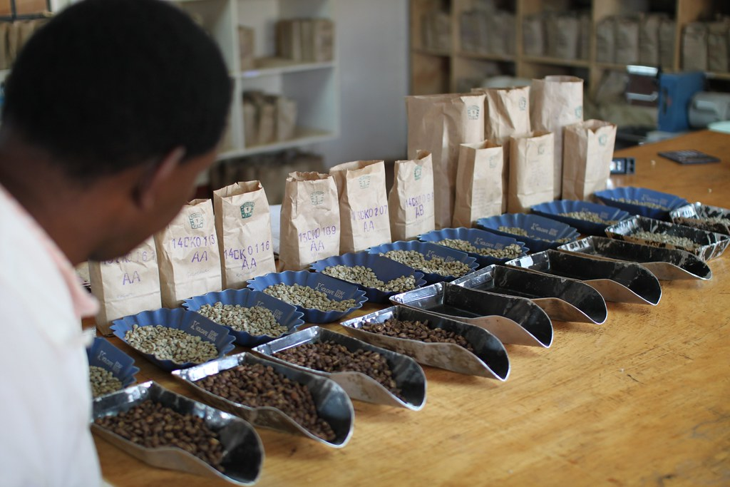 Cupping at CKCM, Central Kenya Coffee Mill, Nyeri.