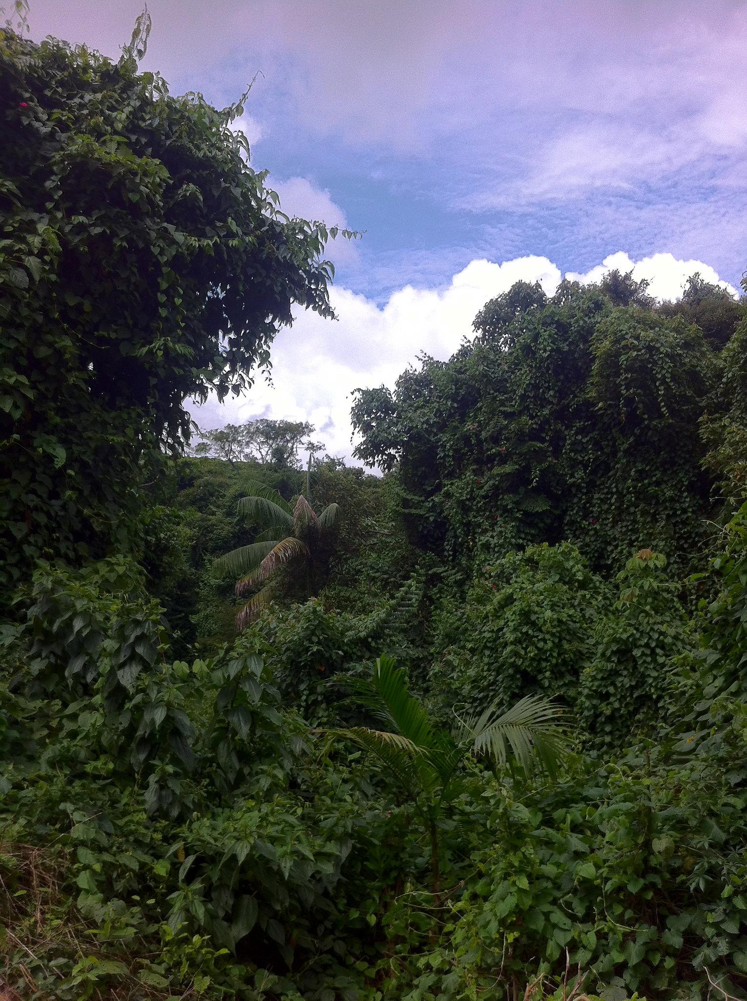 Dense vegetation.