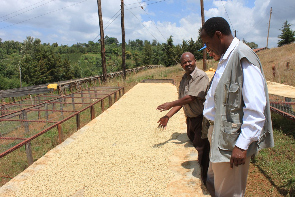 Kieni Facotry Manager Geofrey Wanjau explaining the drying process.