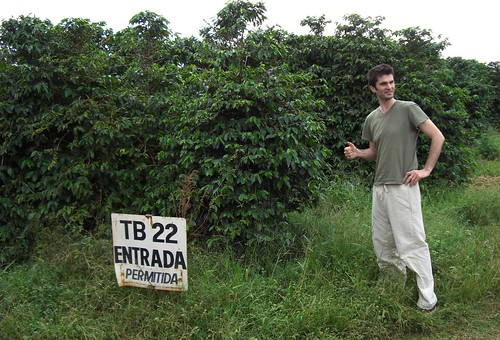 Peter at Lot 22 with Bourbon trees