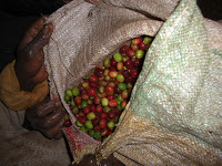 The coffee in the bag was rejected at the mill because of to many green cherries.