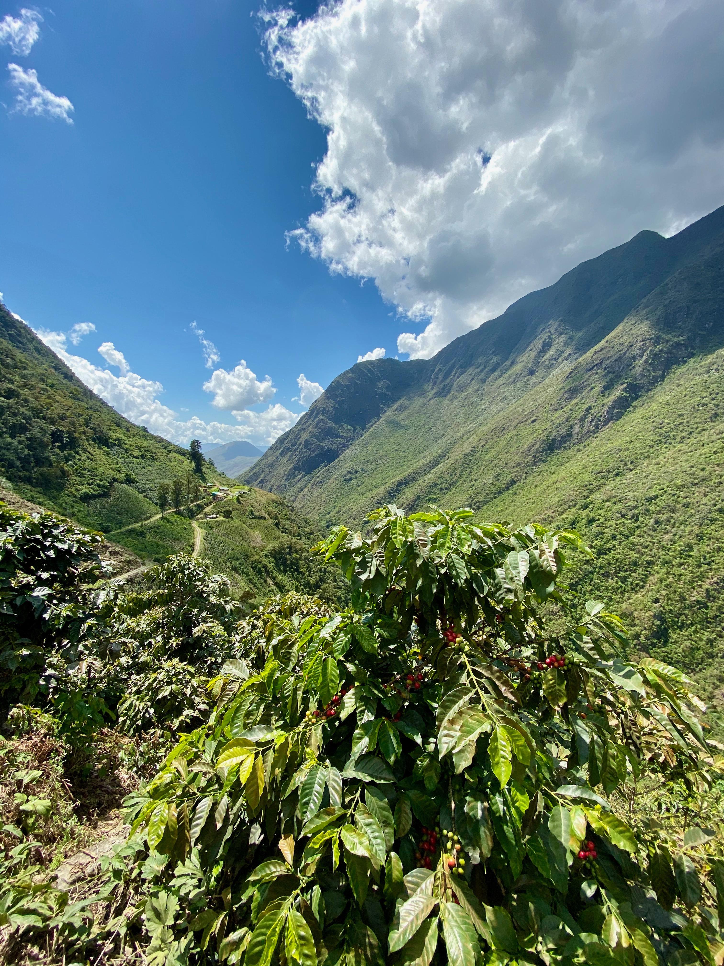 Betagende udsigt over kaffefarmen