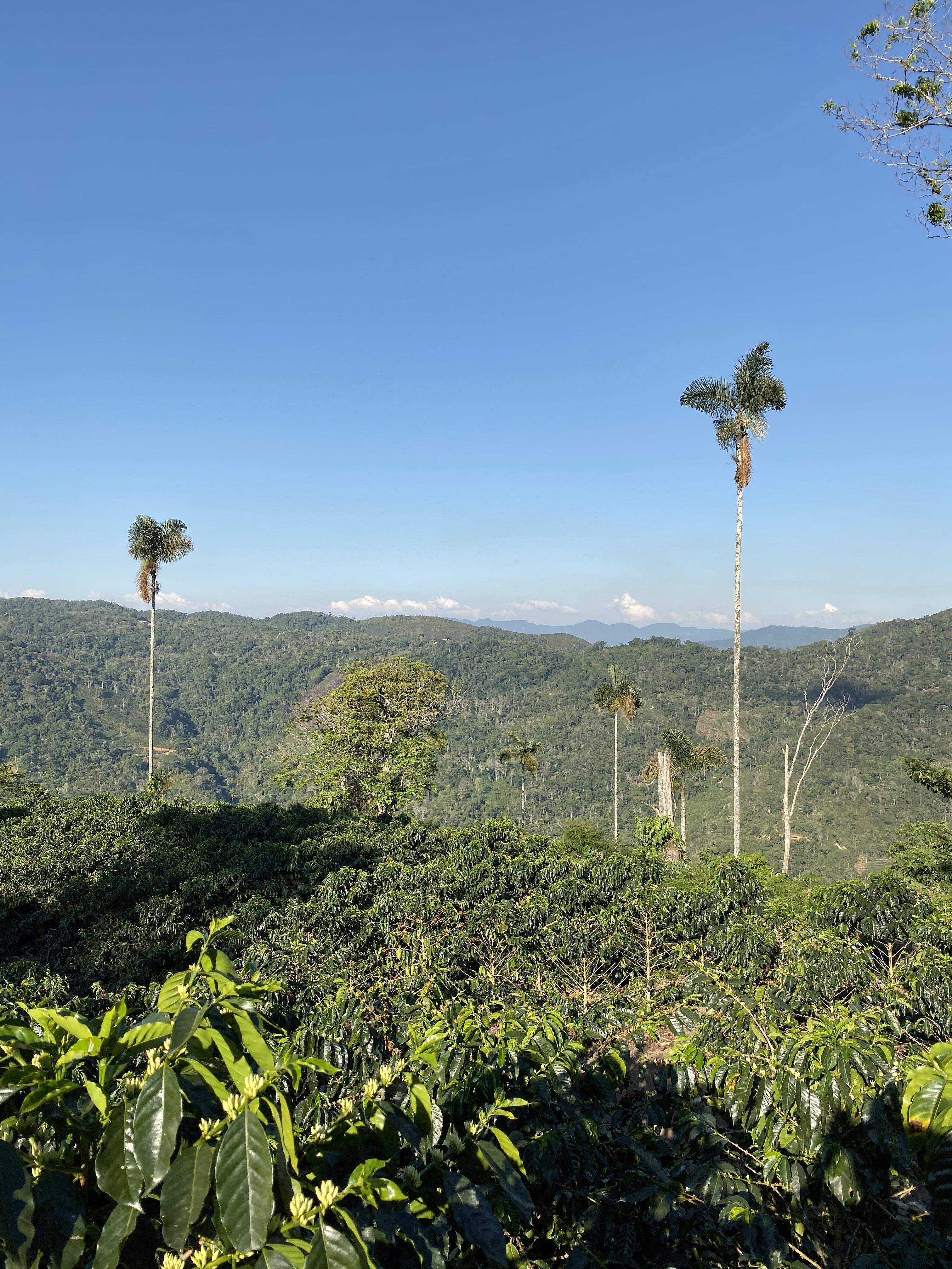 The area in Caranavi