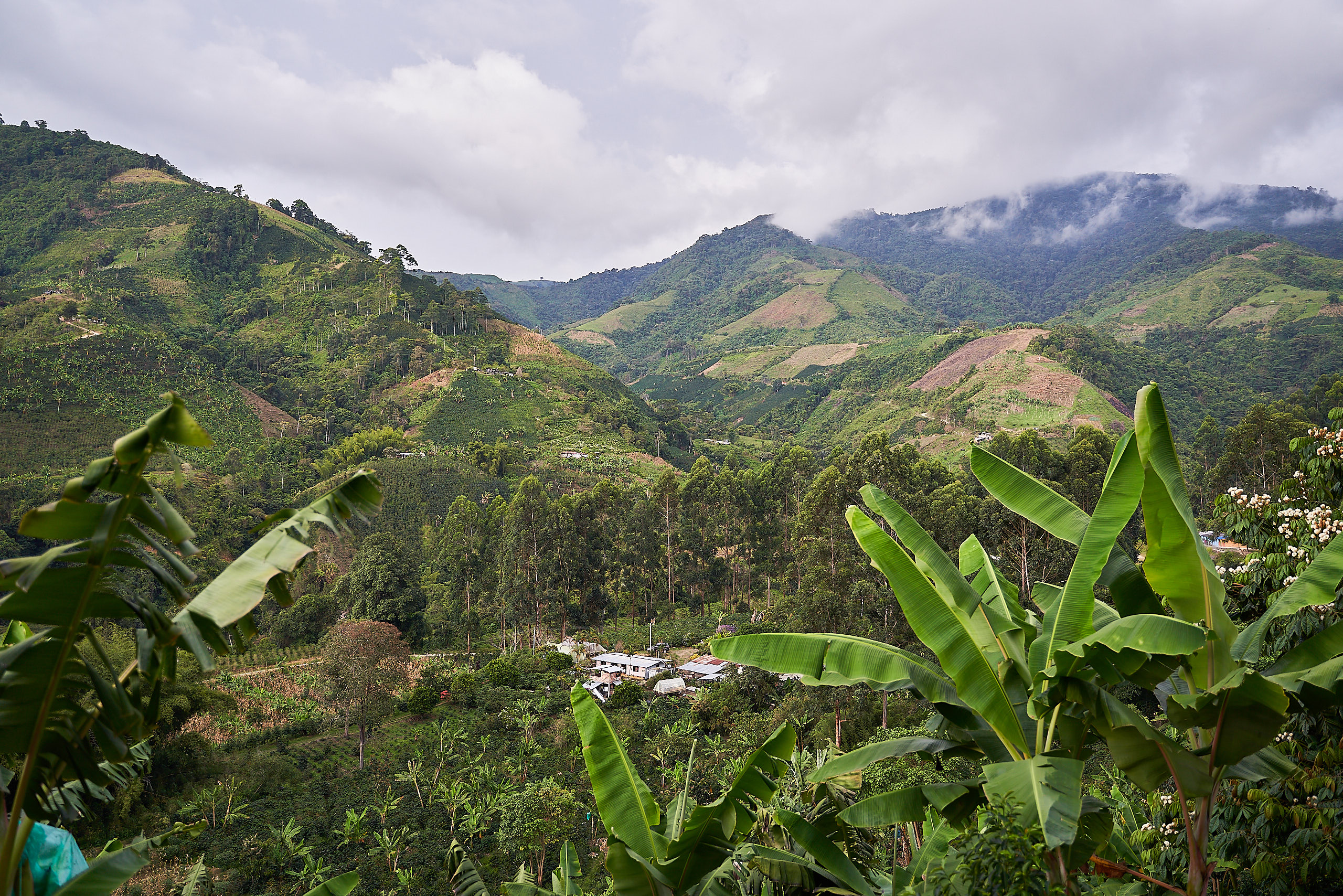 The El Prado farm situated beautifully in the hills of Huila