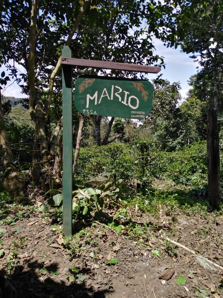 Where Mario grows