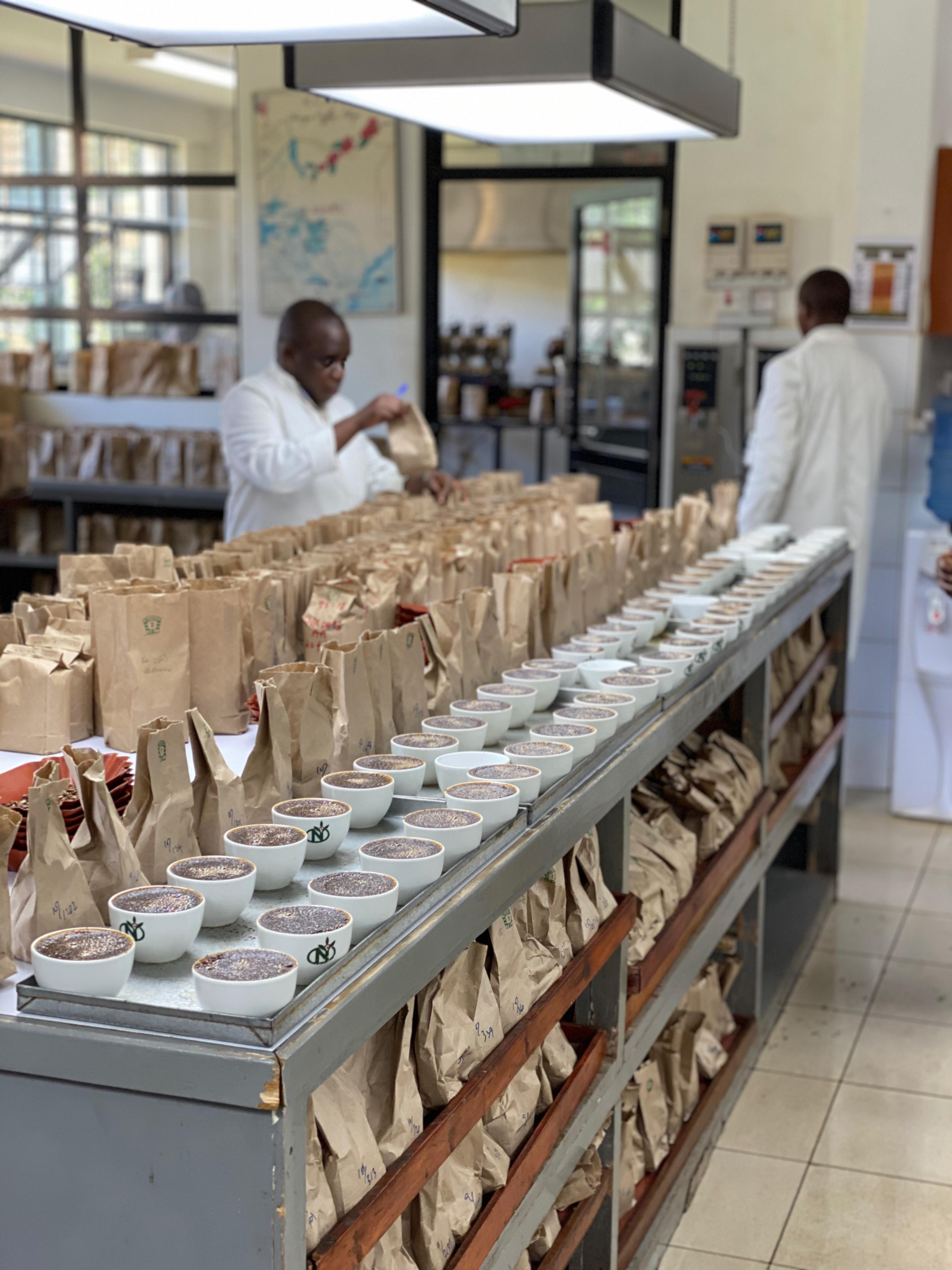 Stort cupping-bord hos Tropical hvor vi finder de bedste kenyanske kaffer