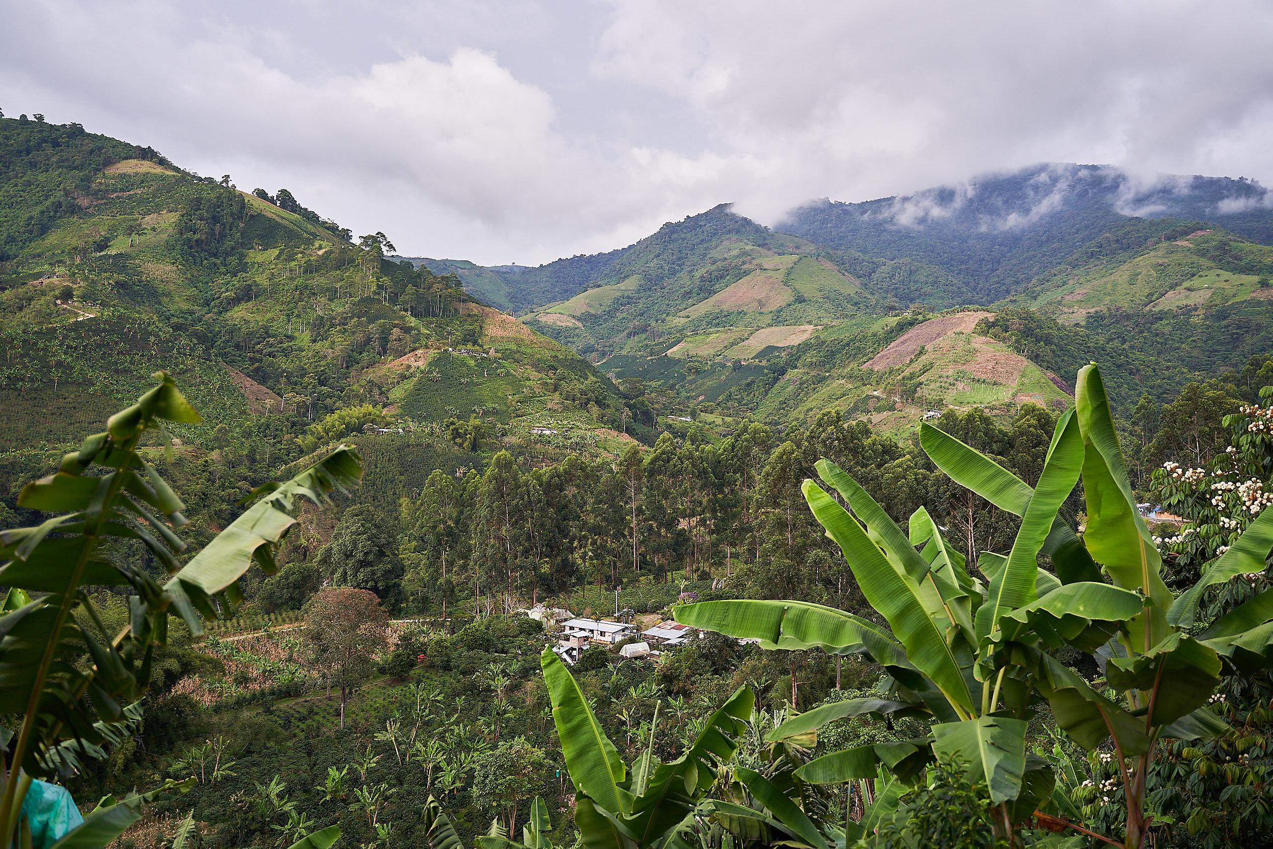 Udsigten over kaffefarmen
