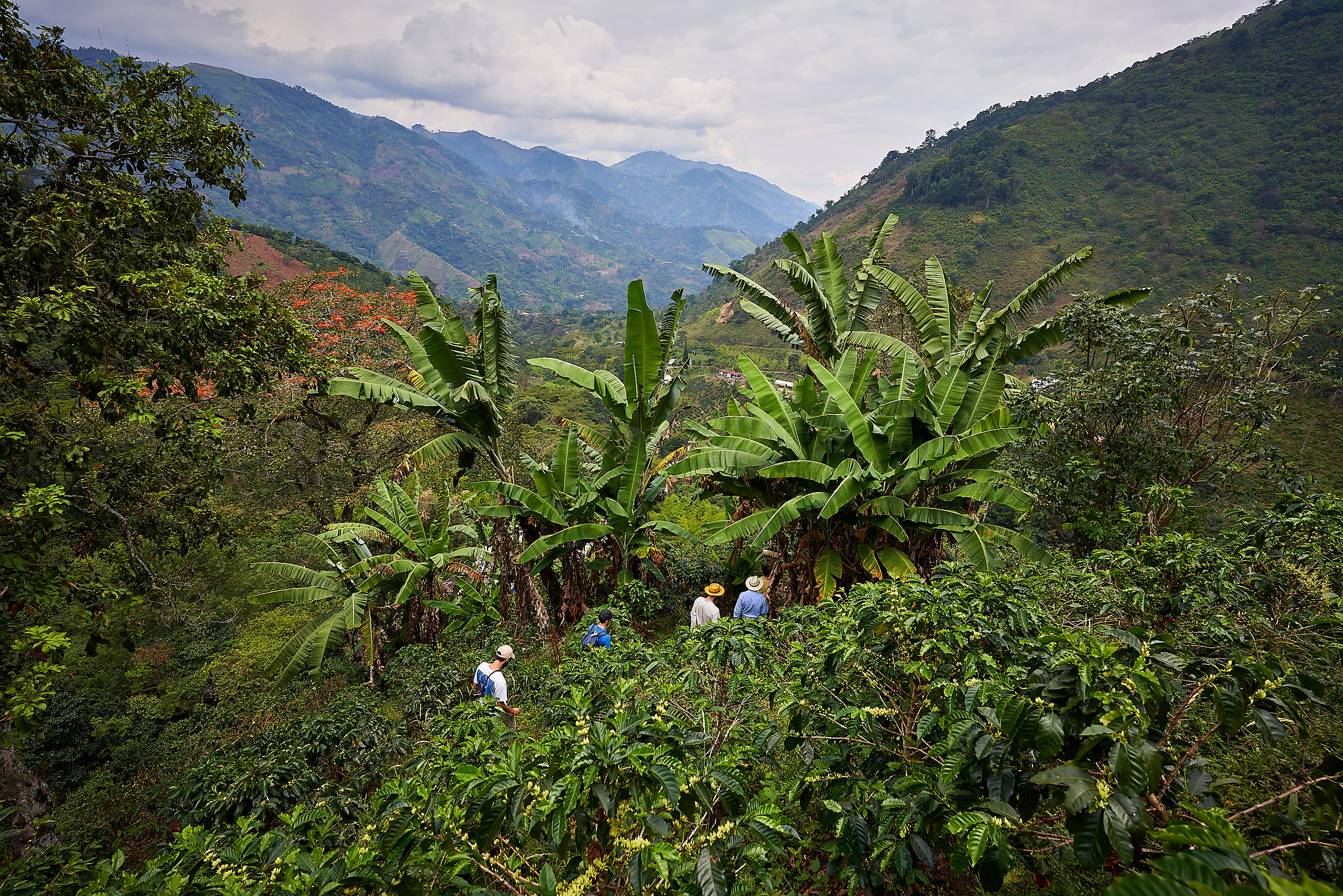 A Colombian family dedicated to coffee | Enciso